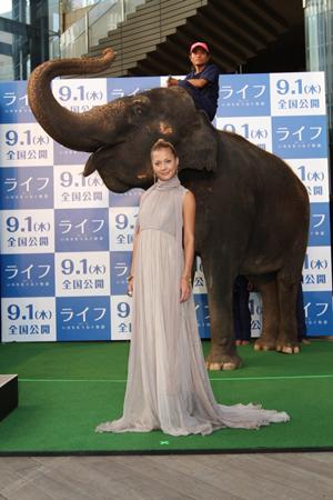 土屋アンナと象のノランディ