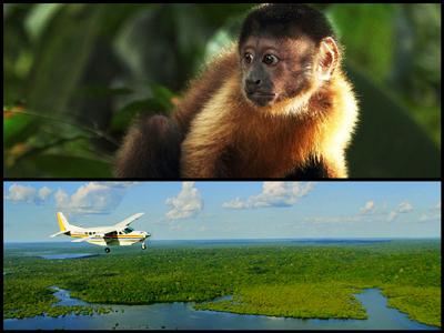 映画『アマゾン大冒険 世界最大のジャングルを探検しよう!』
