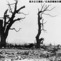 原爆投下後、人々に親しまれていた大クスノキ。