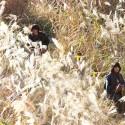 すすきが原を歩む神木隆之介×門脇麦、映画『太陽』(入江悠監督)より