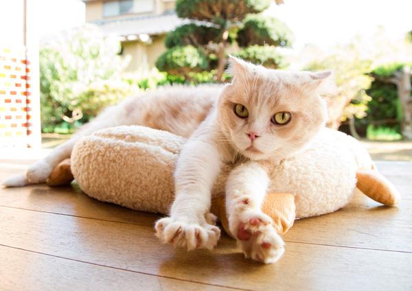 ネコのシナモン、映画『ねこあつめの家』より
