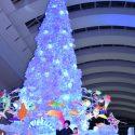 映画『君と100回目の恋』コラボクリスマスツリー点灯式イベント@神奈川県・クイーンズスクエア横浜クイーンモール