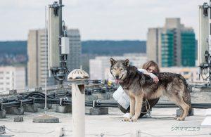 映画『ワイルド わたしの中の獣』(ファインフィルムズ配給)は2016年12月24日[土]より新宿シネマカリテほかにて公開中