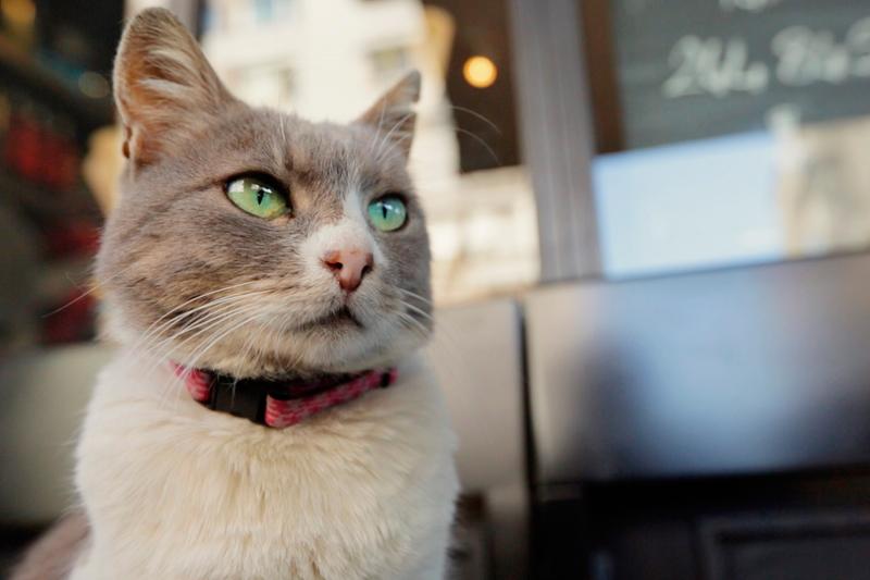 猫が教えてくれたこと(原題 Kedi )はトルコのネコたちの魅力がギュギュ!