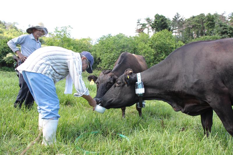 映画『被ばく牛と生きる』