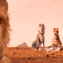 犬ヶ島の犬たち、映画『犬ヶ島』より