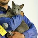 女優・沢尻エリカの愛猫ペットはロシアンブルーのグリグリ