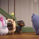 ポメラニアンのギジェット(沢城みゆき)が 猫になるべく、クロエ(永作博美)からスパルタのレッスンを受けている
