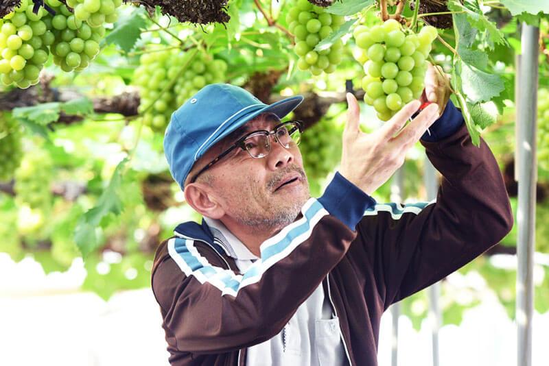 竹中直人、映画『しあわせのマスカット』
